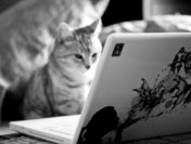 5 Sources of Ideas for Creating Content for Your Pet Business Blog