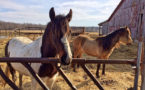 Opening the Online Floodgates in Equine Industry